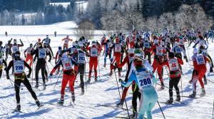 Bad Mitterndorf, Steiermark, Oesterreich (Austria), 31.01.2015: Skilanglauf, 36. Internationaler Steiralauf, Bild zeigt Laeufer nach dem Massenstart ueber 25 und 50 km Freie Technik.